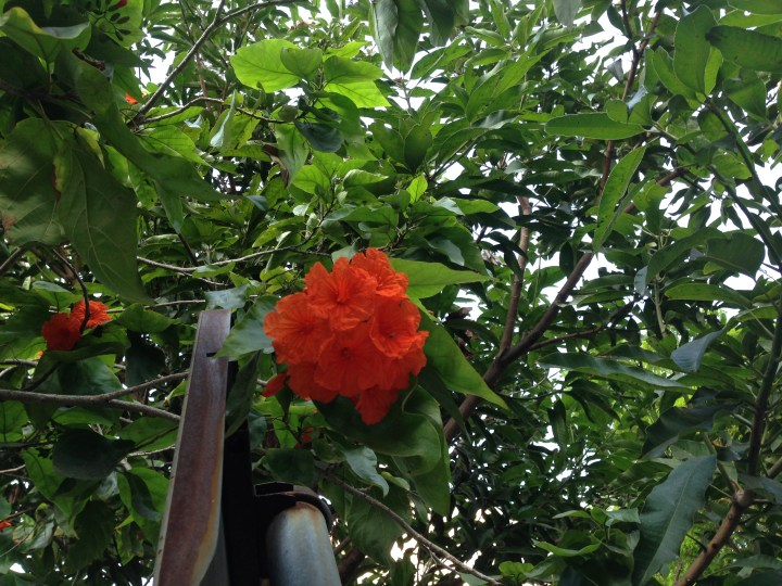 花と木の様子
