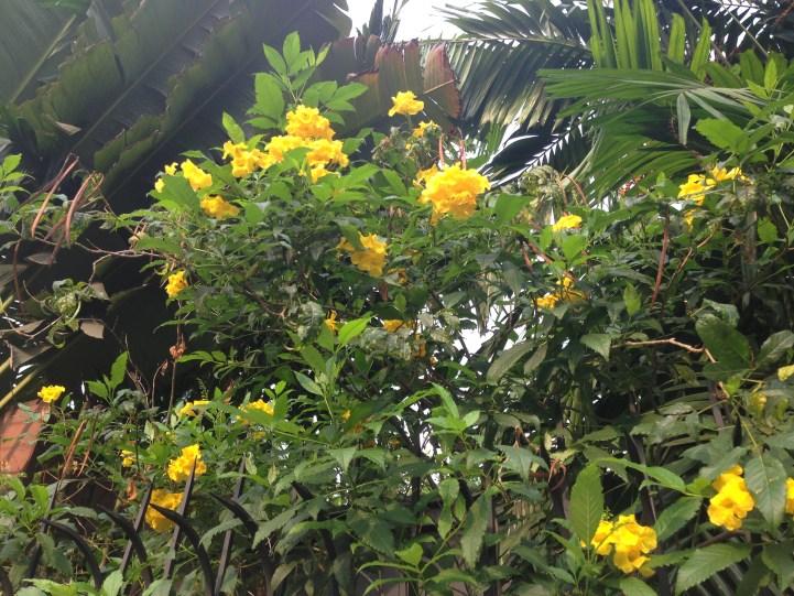 花と枝の様子