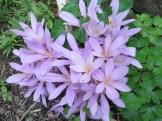 群生する花のアップ