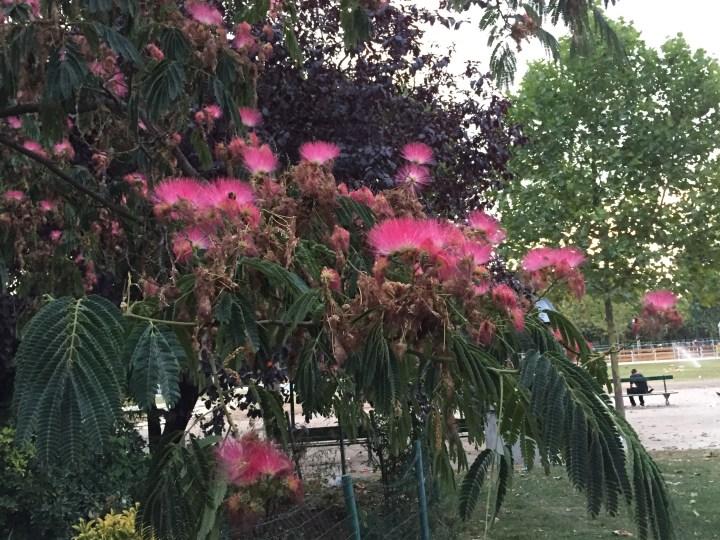 ネムノキ  花と木の姿