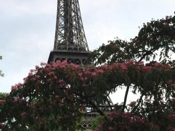 ネムノキの花とエッフェル塔