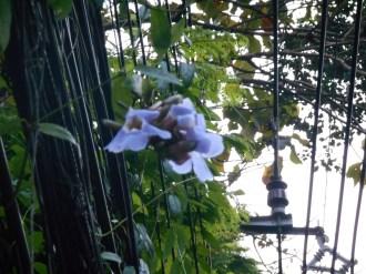 塀にかかる植物と花