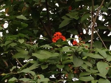 花と木の姿