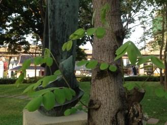 木の幹と葉
