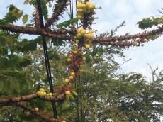 実と木の姿