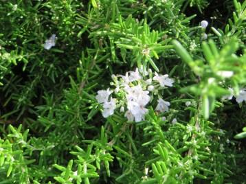 花の小さい種