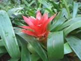 赤い花のアップ