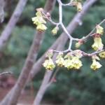 咲き始めの花の様子