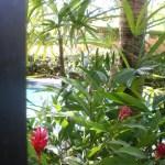 プールサイドの花