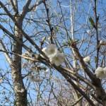 ジュウガツザクラ 春咲きの花
