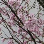 小さい花が集まって咲いている様子