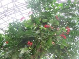 色々な花の状態が見られる様子