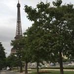 エッフェル塔とキリの木(若い実)