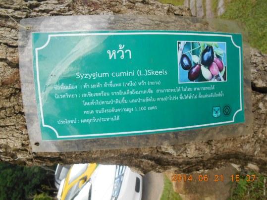 Jambolana/ ムラサキフトモモの標識