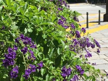 タイワンレンギョウの植物の様子
