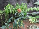 ニオイサンタンカ 植物の様子