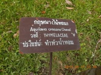 シャムジンコウ の標識