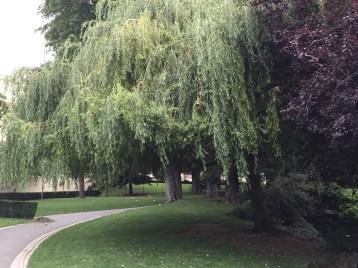 パリの公園のシダレヤナギ