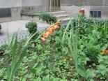オレンジ色のグラジオラスの花