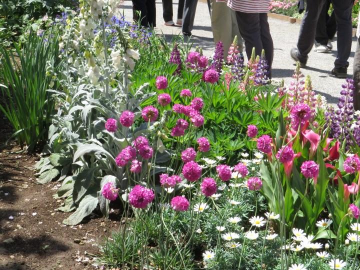 アルメリア 花と草の様子