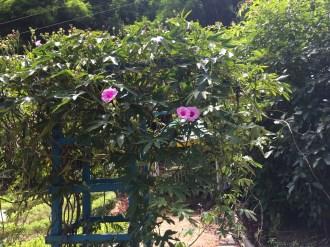 ソケイノウゼン 花を咲かせている植物の姿