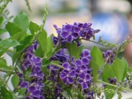 タイワンレンギョウ 花の姿