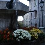キク 小菊 ジュネーブの噴水広場