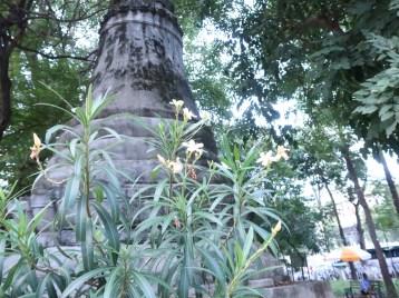 仏塔の前に咲く白花のキョウチクトウ