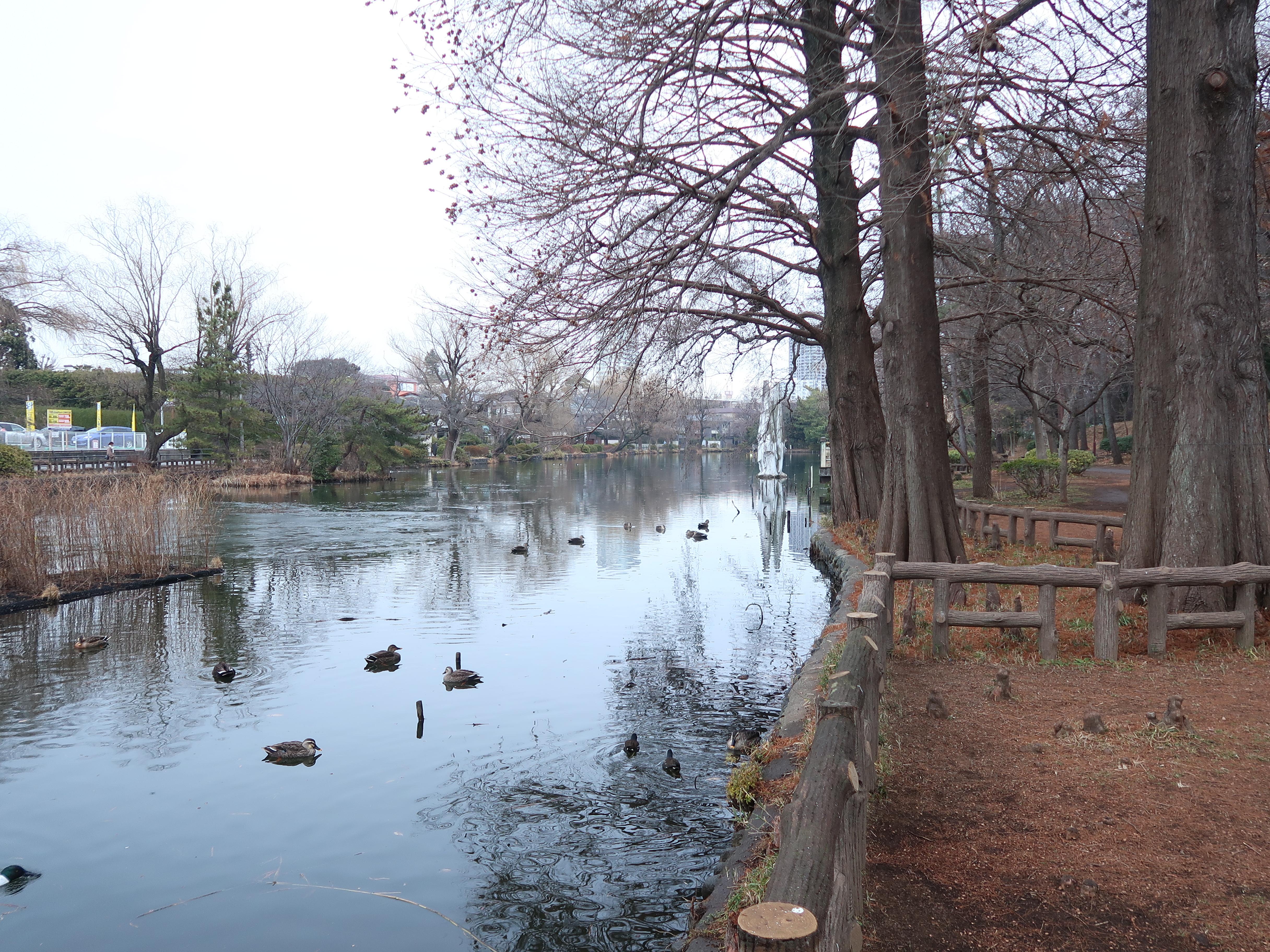 石神井公園 氷のはった石神井池