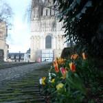 チューリップ フランス早春の花