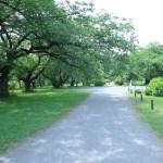 小石川植物園 中央の園地