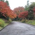 色づいた皇居内の木々の紅葉