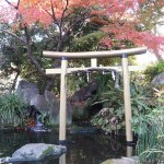 Maple/ カエデ 紅葉したモミジと鳥居