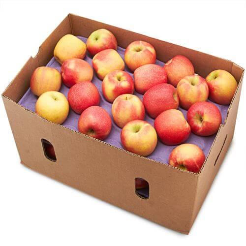 Gala Apples, Case