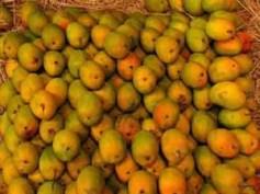 mango for web
