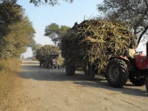 02-01-15 Kshetriya Faizabad - Ganna 1 web