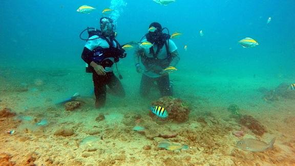 Churna Island, coral reefs