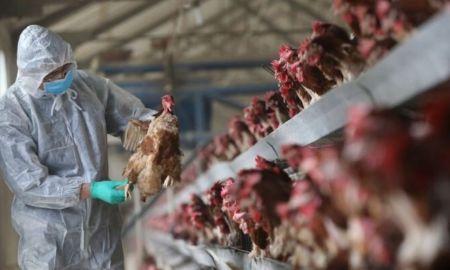 Saudi Arabia Reports Outbreak of Contagious Virus