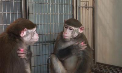Monkeys Can Be Taught Self-Recognition, Researchers Find