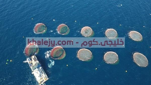 وظائف اليوم في عمان شركة المياه الزرقاء