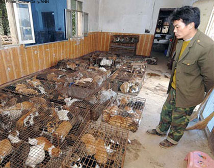 4 million cats eaten in China each year