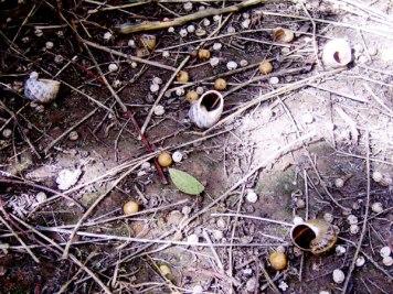 Sticks & Snails