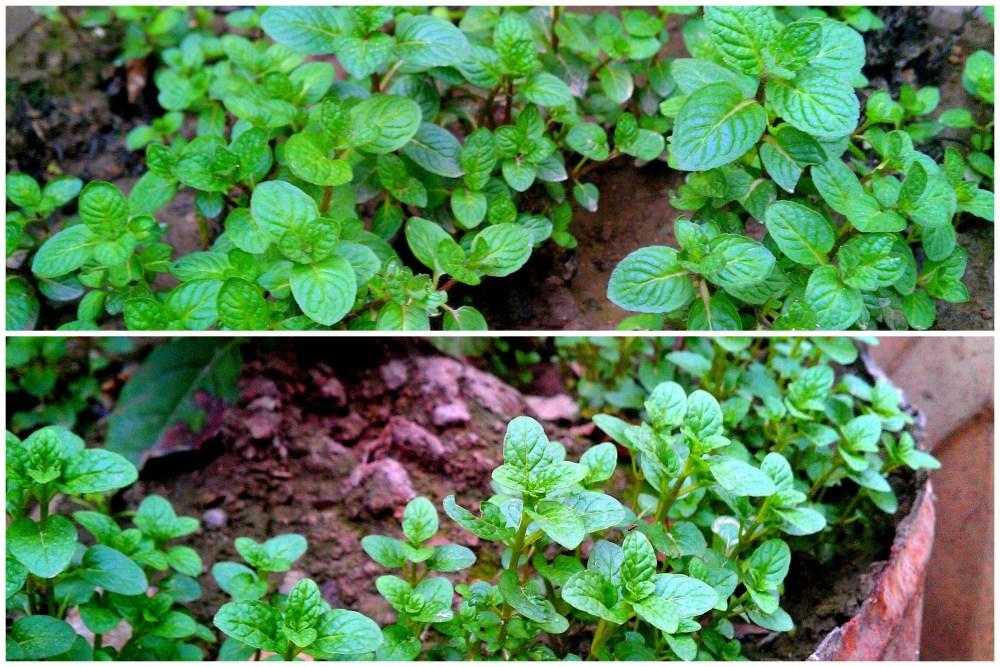 Organic Gardening, Future Plans & Me (3/6)