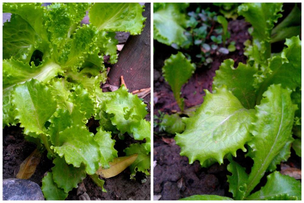 Organic Gardening, Future Plans & Me (4/6)