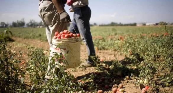 Through the Pandemic Lenses: A Look at Food Security
