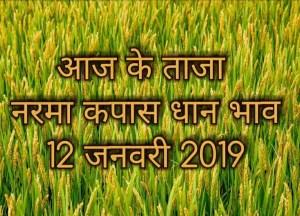 mandi-bhav-12-january , mandi rates,मंडी भाव