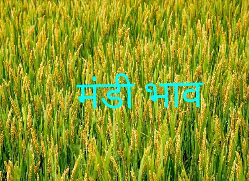 mandi-bhav-14-01-2019 , mandi bhav today , mandi rates