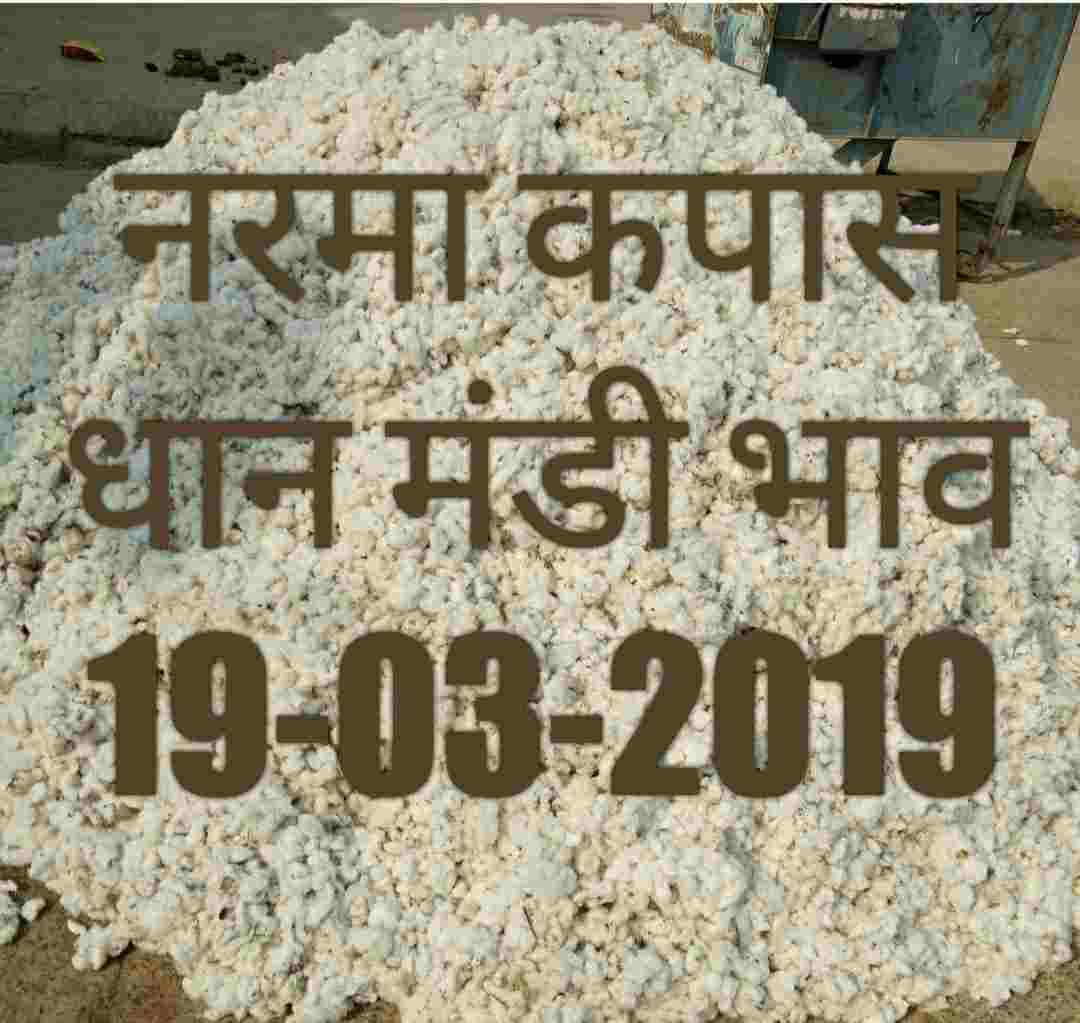 Mandi Bhav 19-03-2019 | Cotton Prices