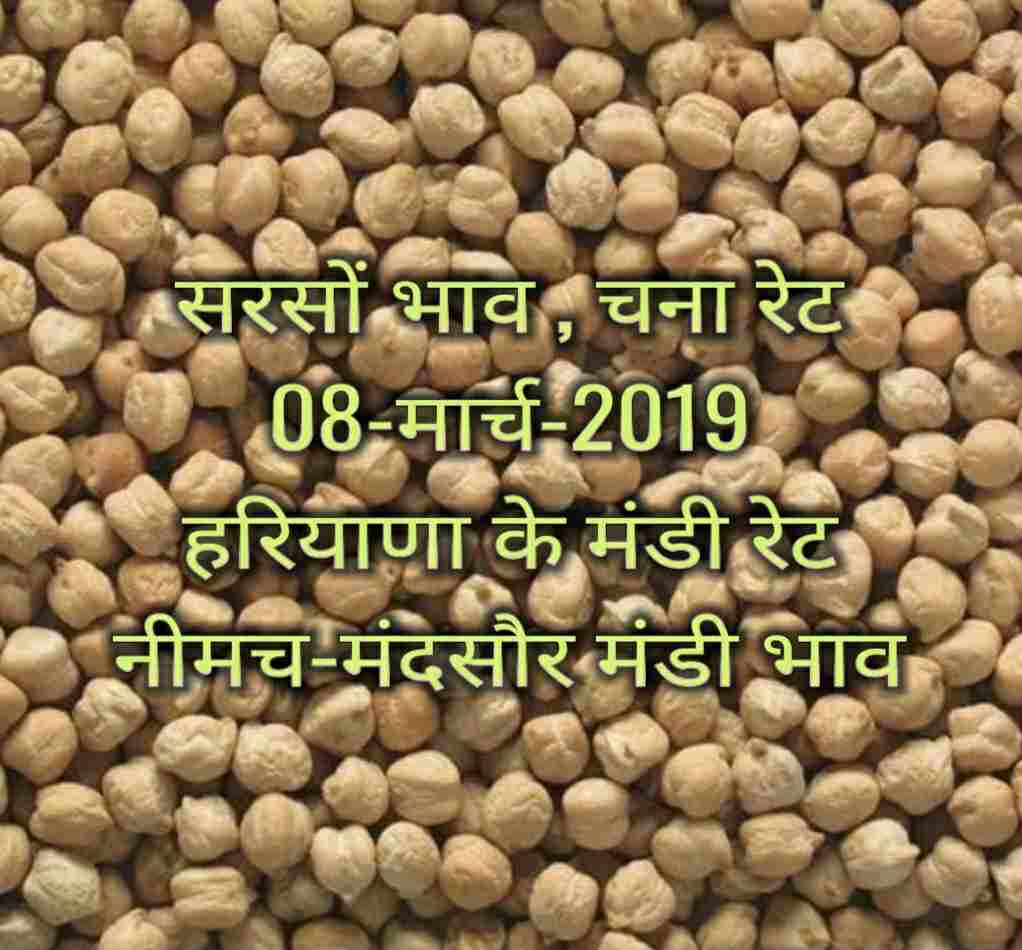Sarso ka bhav 08-March-2019 | Soyabean Rates Today