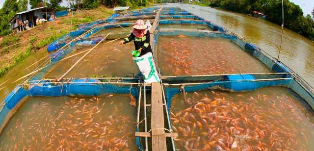 मछली पालन कैसे करें (How to do Fish farming in hindi)